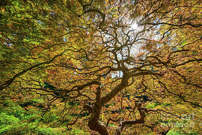 Royalty-Free and Rights-Managed Images - Twisted Branches  by Michael Ver Sprill