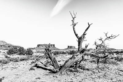 Photograph - Twisted Death In The Desert by Andy Crawford