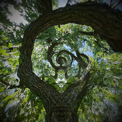 Photograph - Twisted Tree by Silvia Marcoschamer