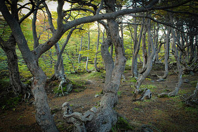 Photograph - Twisted Trees In Argentina by Mark Duehmig