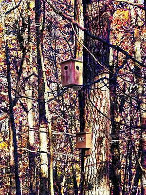 Photograph - Two Birdhouses In The Autumn Woods by Susan Savad