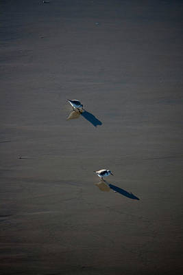 Photograph - Two Birds by Eric Christopher Jackson