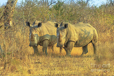 Photograph - Two Black Rhino by Benny Marty