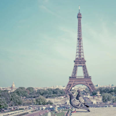 Photograph - Two Doves In Front Of Eiffel Tower by Cindy Prins
