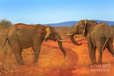 Photograph - Two Elephant On Kalahari Desert by Benny Marty