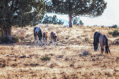 Photograph - Two For One by Belinda Greb
