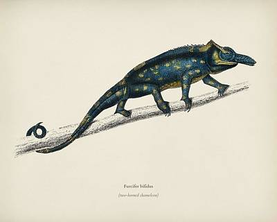 Painting - Two-horned Chameleon  Furcifer Bifidus  Illustrated By Charles Dessalines D  Orbigny  1806 1876  by Celestial Images