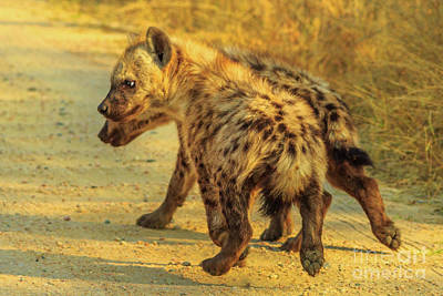 Photograph - Two Hyena Cubs by Benny Marty