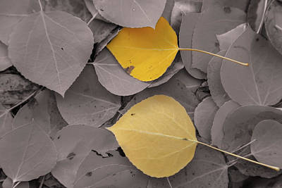 Photograph - Two Leaves by Jonathan Nguyen