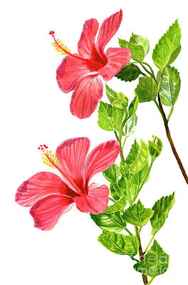 Two Light Red Hibiscus Flowers Original