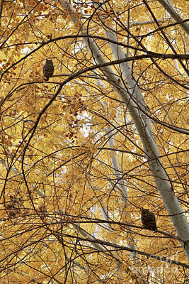 Photograph - Two Owls In Autumn Tree by Carol Groenen
