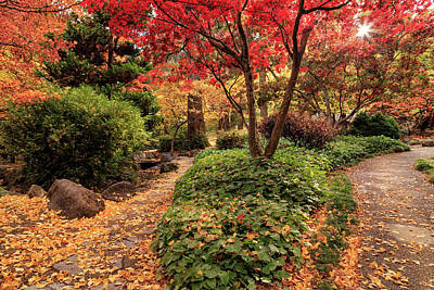 Photograph - Two Paths In Lithia Park by James Eddy