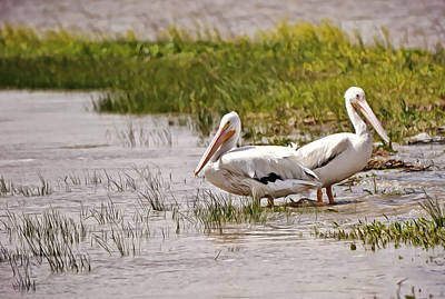 Michael Jackson - Two Pelicans in Marshland by Gaby Ethington