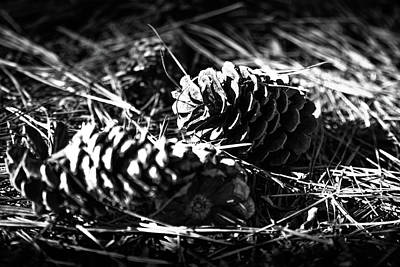 Photograph - Two Pine Cones by Doug Camara