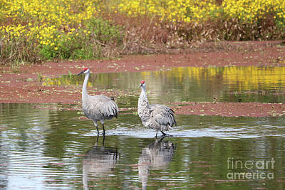 Photograph - Two Sandhills In Marsh With Wonderful Wildflowers by Carol Groenen