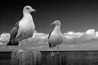 Photograph - Two Sea Gulls On Pier Pilings In Black And White by Randall Nyhof