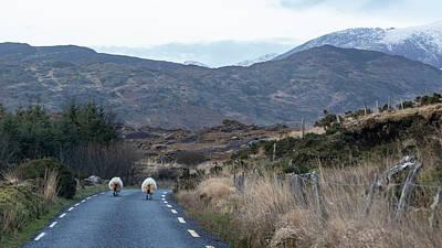 Photograph - Two Sheep Head Home Ireland  by John McGraw