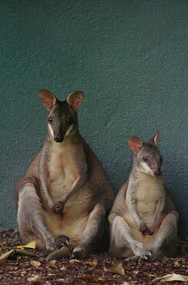 Animal Family Photograph - Two Sitting Wallabies by Ming Thein / Mingthein.com