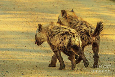 Photograph - Two Spotted Hyena Cubs by Benny Marty