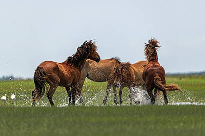 Photograph - Two Stallions Getting Frisky by Dan Friend