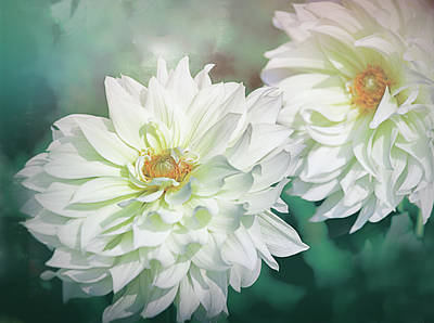 Photograph - Two White Dahlias by Julie Palencia