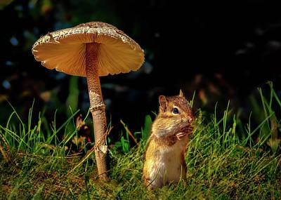 Photograph - Under The Mushroom by Bob Orsillo