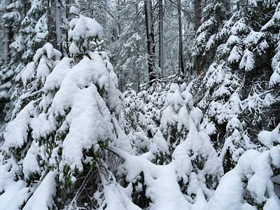 Jouko Lehto Royalty Free Images - Under the snow Royalty-Free Image by Jouko Lehto
