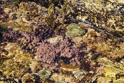 Photograph - Underwater Garden - Green Sea Anemones And Red Seaweed by Georgia Mizuleva