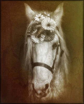 Photograph - Unicorn by Elaine Malott