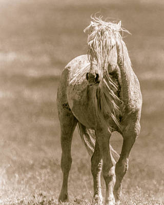 Photograph - Untamed by Mary Hone