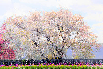 Photograph - Untermyer Cherry Trees by Jessica Jenney