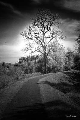 Digital Art - Scary Tree by Yuri Lev