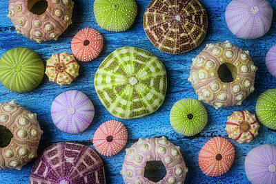 Photograph - Unusial Sea Urchins by Garry Gay