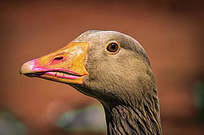 Digital Art - Up Close With A Goose by Scott Lyons
