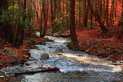 Photograph - Upper Dunnfield Creek by Raymond Salani III