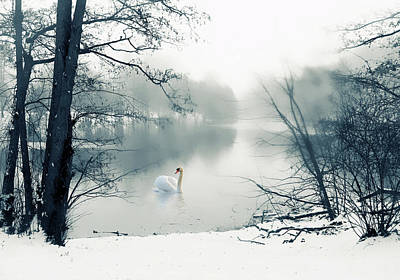 Photograph - Swan Song Blue by Jessica Jenney
