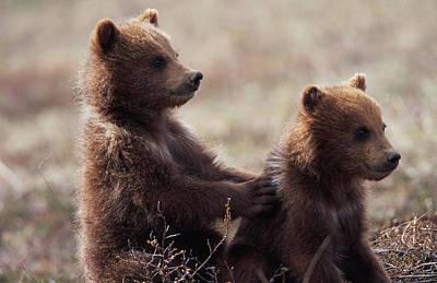 Photograph - Usa, Alaska, Denali National Park by Eastcott Momatiuk