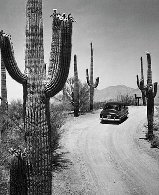 Photograph - Usa, Arizona, Saguaro National Park by Superstock