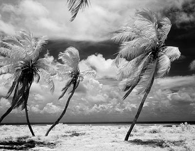 Photograph - Usa, Florida, Florida Keys, Infrared by Superstock