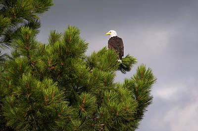 Eagle Photograph - Usa, Oregon, Lake County, Bald Eagle by Gary Weathers