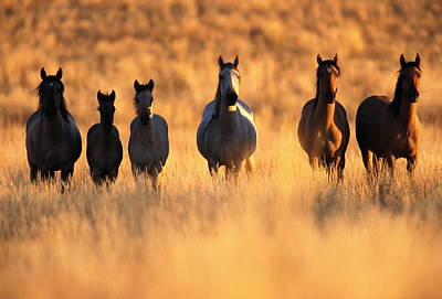Animal Family Photograph - Usa, Oregon, Mustangs Equus Caballus by Eastcott Momatiuk