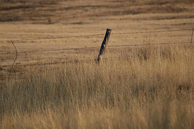 Photograph - Utah Fence And Field by Colleen Cornelius