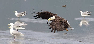 Photograph - Valdez Eagle One by Jean Clark
