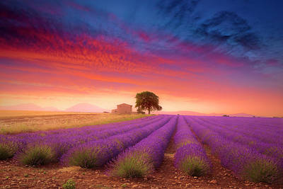 Photograph - Valensole Plateau by Giovanni Allievi