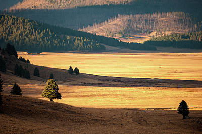 Photograph - Valles Caldera Detail by Jeff Phillippi