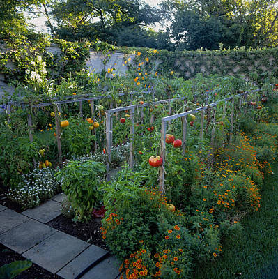 Excellent Vegetable Garden Art For Sale Interior Design Ideas Gentotryabchikinfo