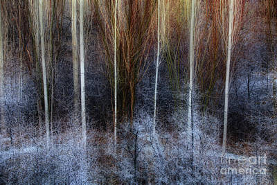 Photograph - Veins Of Forest by Awais Yaqub