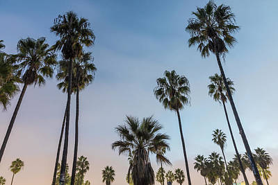 Photograph - Venice Beach Palm Trees  by John McGraw