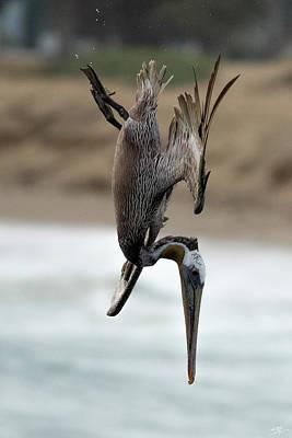 Parks - Ventura Brown Pelican Diving 7427 by Sean