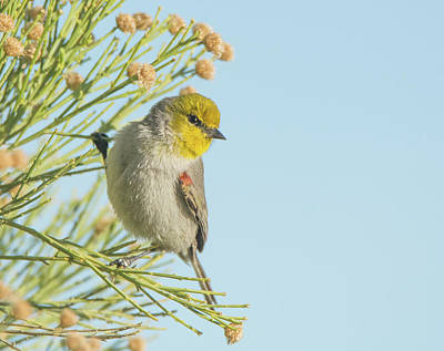 Photograph - Verdin 1659-011919 by Tam Ryan